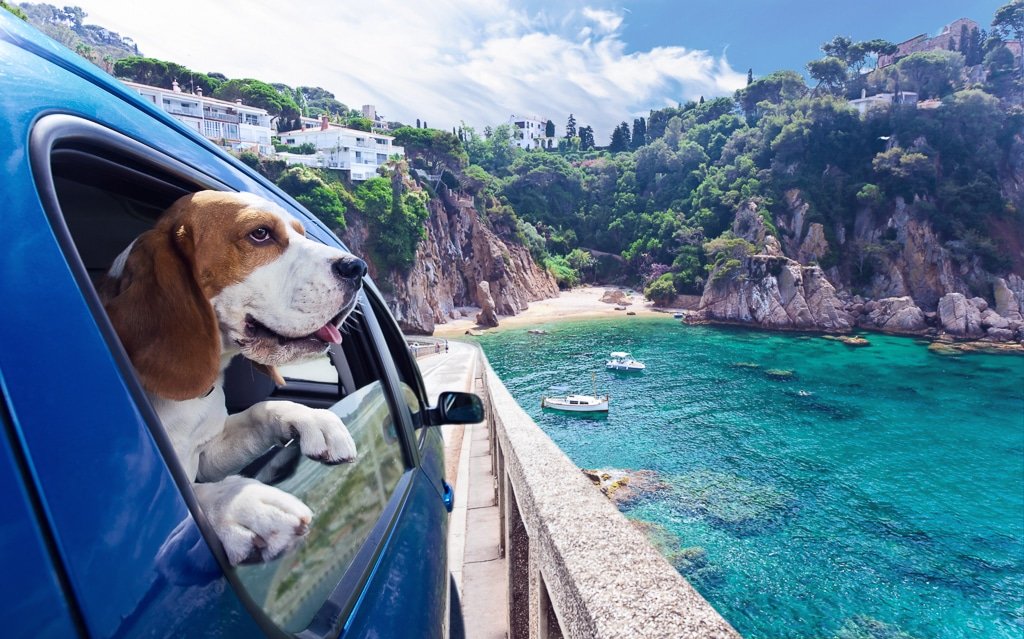 Reisen mit Hunden