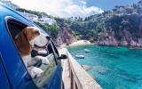 8 Tipps für Reisen mit Ihrem Hund