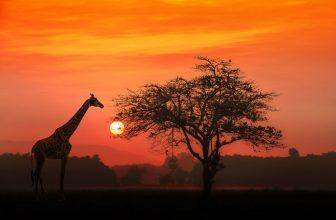 6 – Safari Reisetipps zu Planung