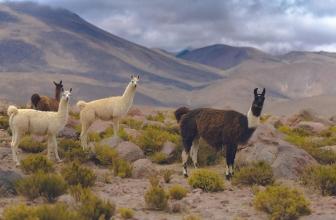 Beste Reisezeit Chile (Klima, Wetter,Regenzeit & Trockenzeit)