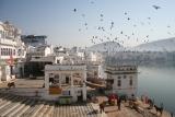 """""""Unglaubliches Indien"""" mit Pushkar Camel Festival"""